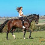 Teamwork zu Pferd