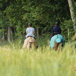 Mit Maultieren unterwegs in der Natur