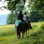 Vom Wald hinaus auf die Felder reiten